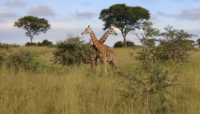 Uganda - Explore African Pearl